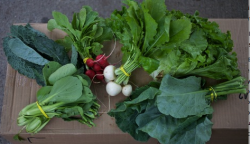 Should you join a CSA this summer?