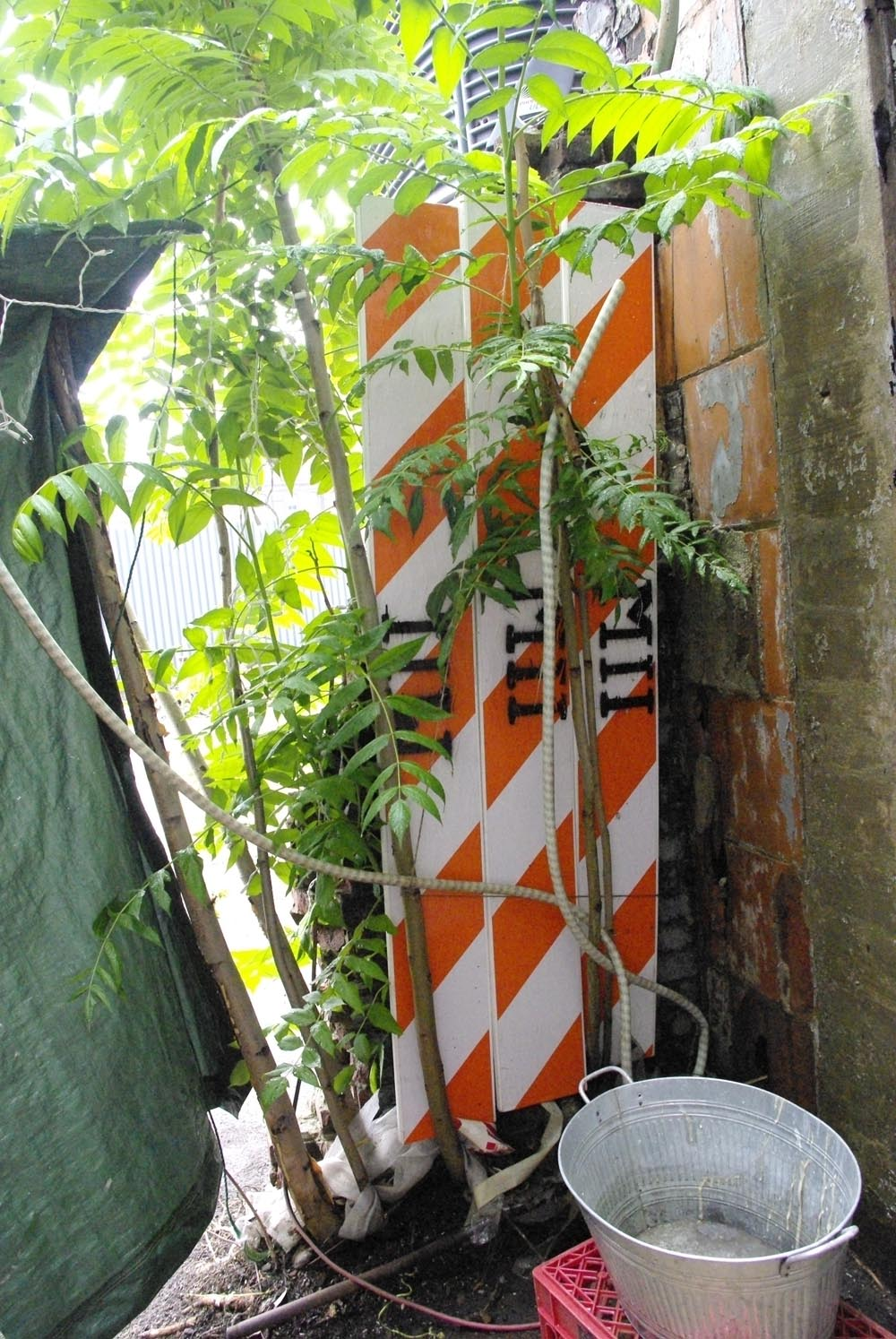 shanty-foliage