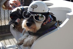 Three places to pimp your pup this weekend