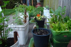 Veggie-growing guide, part 4: putting it all together