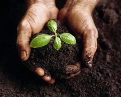 Veggie-growing guide, part 3: soil
