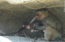 Bored? Name a baby baboon