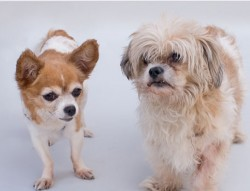 Help re-unite Edith & Archie for the holidays