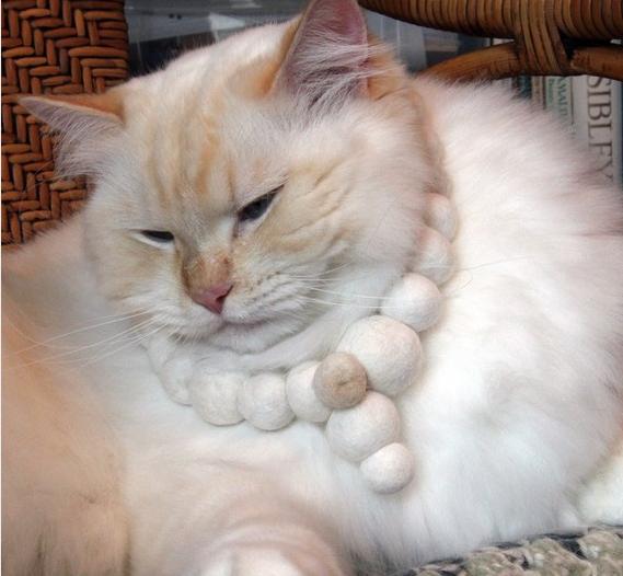 Gaia, Flora Davis's cat