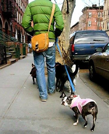 Dogs need walking