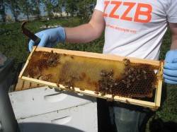 A chance to get your beekeeping hobby really buzzing