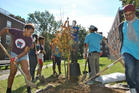 Green thumbs up! Free tree giveaway this weekend