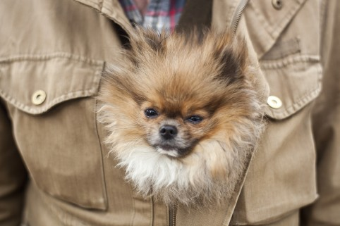 Free glamour shots for your pet this weekend