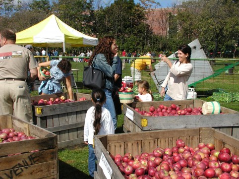 You picked that! Where to go apple picking near NYC