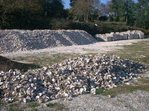 40,000 (you read that right) oyster shells, for free