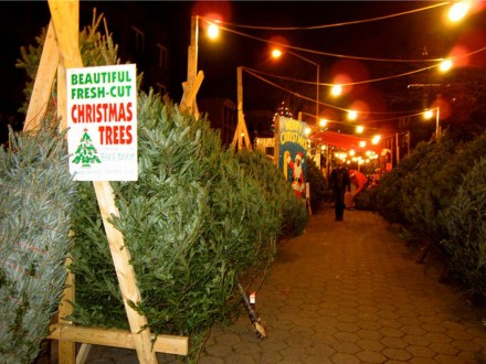 It was bound to happen: organic Christmas trees