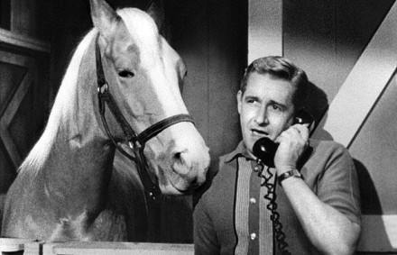 IKEA's meatballs recalled due to horse meat