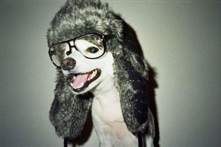 Virtual try-on: a feature so easy to use, that even dogs in hats can do it. Via Lookmatic.