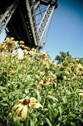 Flip winter the bird, go to gardening day at East River Park