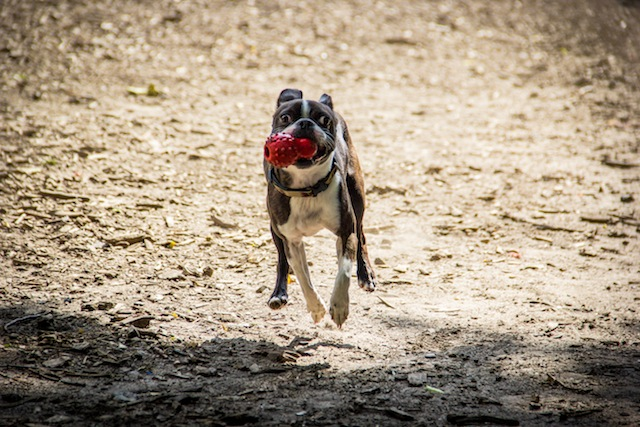 The best North Brooklyn dog runs and off-leash areas