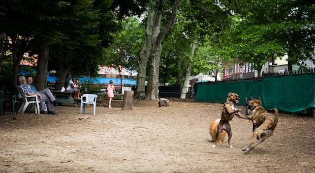 mcgolrick park dog run