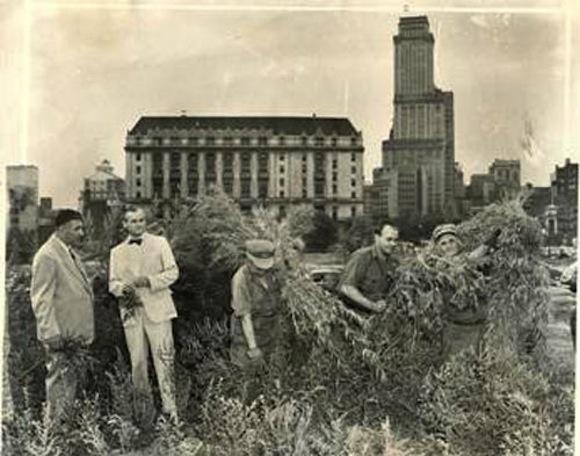 brooklyn marijuana 1950s