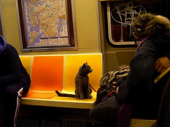 Cat GIFs describe how wrong BuzzFeed is about the subway