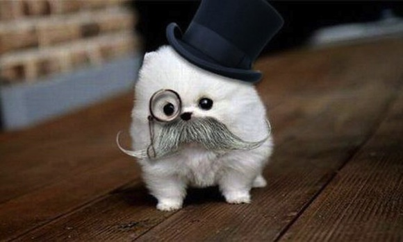 dog with monocle