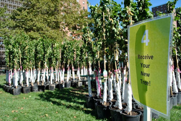 million trees nyc