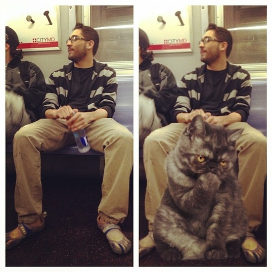 Tumblr shows guys spreading out on subway are saving room for cats