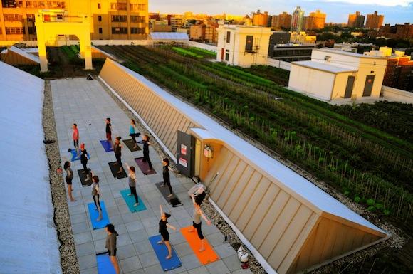 brooklyn grange navy yard yoga