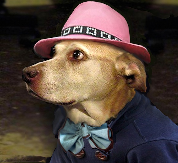 freddy's dog fashion show