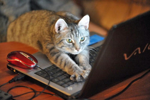 Free classes will teach you the basics of coding, with kittens