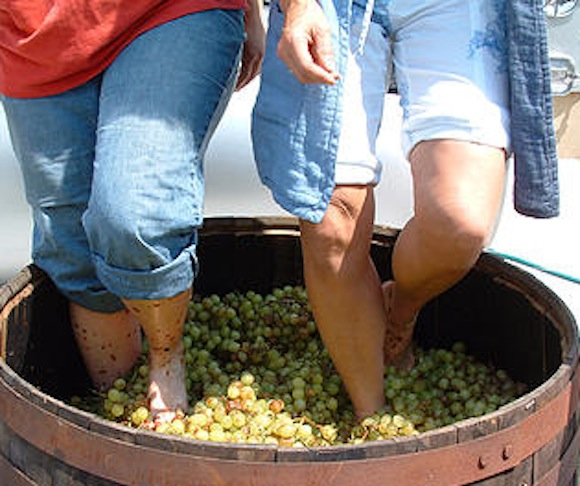 Give grapes the stomping they deserve this weekend in Canarsie