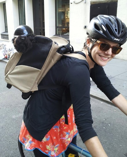 anna jane grossman school for dogs