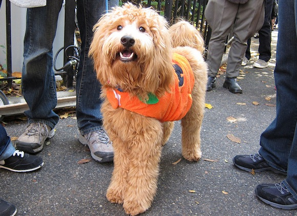 Dogtoberfest, plus 15 more free things to do in Brooklyn this week