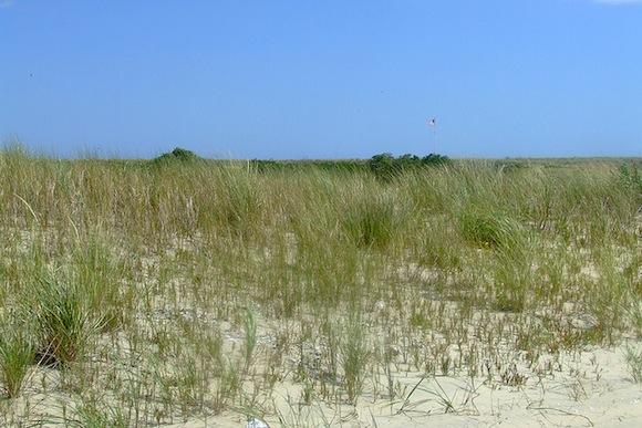 rockaway dunes