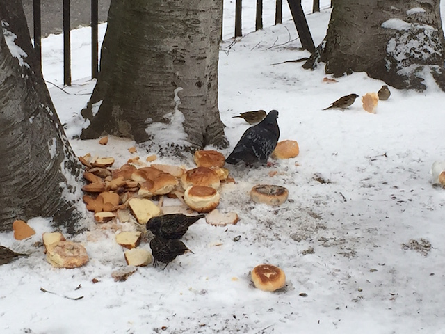 There is no weather system that will keep birds from eating bread. Photo by Cat Wolinski