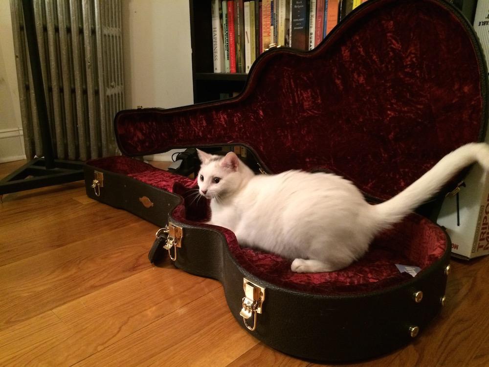 fillmore-real-estate-grace-weber-music-brooklyn-original-cat