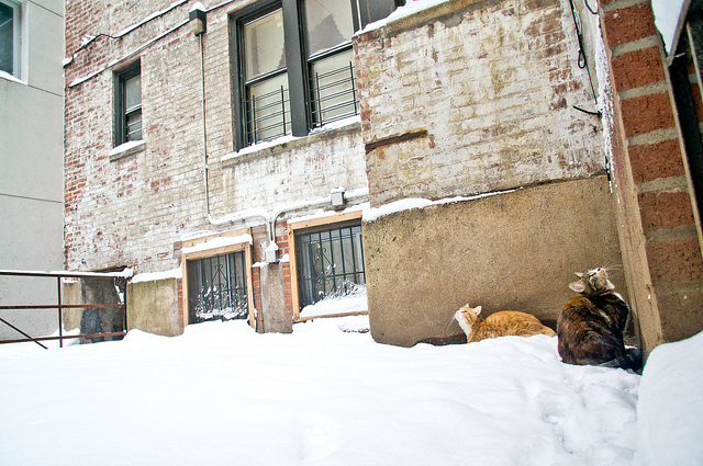 Like cats in a snowy Brooklyn alley, Margaret learned resilience here.