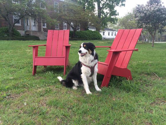 They got a dog! via the Governors Island Blog