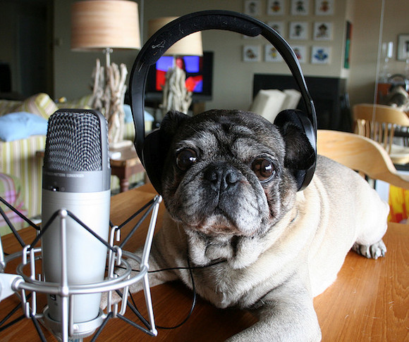 your pugcast idea had better be good. via flickr user zoomar