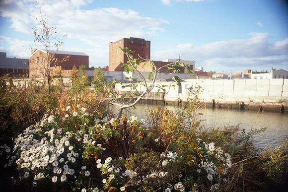 See? Flowers grow near the canal. via Flickr user Alexander Rabb