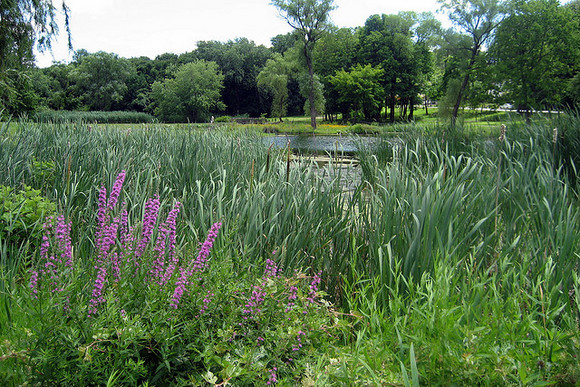 Over 20 gardens you can frolick in. Image via Flickr user Wally Gobetz