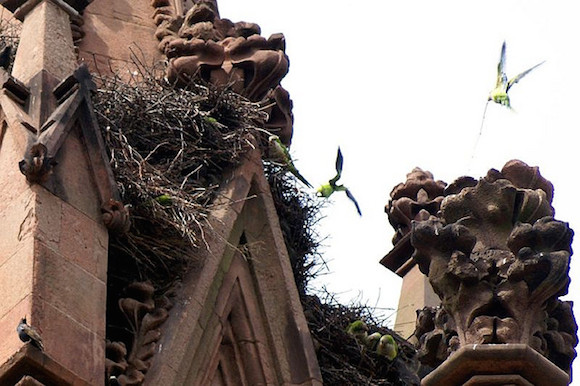 Monk parakeets lord over the Greenwood arch. Via flickr user ClatieK