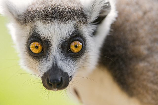 BK Top 5: The best things going on tonight, from lemur lessons to Fab Four covers