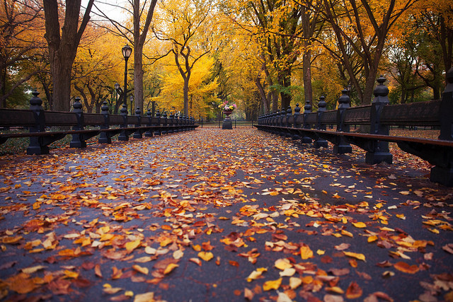 Take the best picture of fall in the city to be the newest NYC Instagram Ambassador