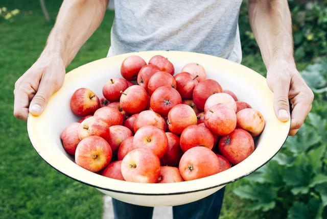Apple Picking New York