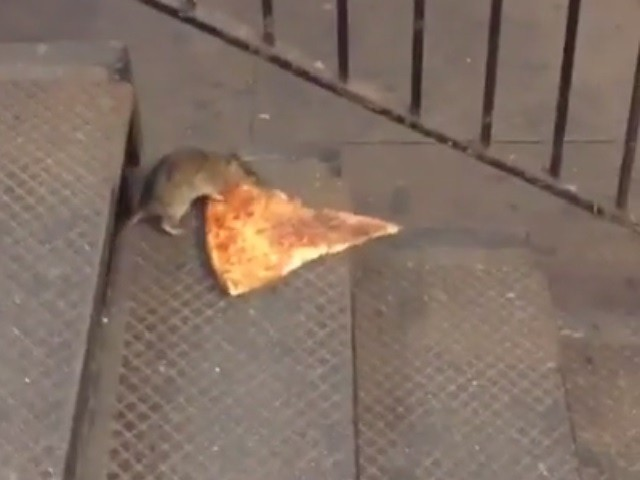 New Yorkers demand death to non-pizza carrying rats