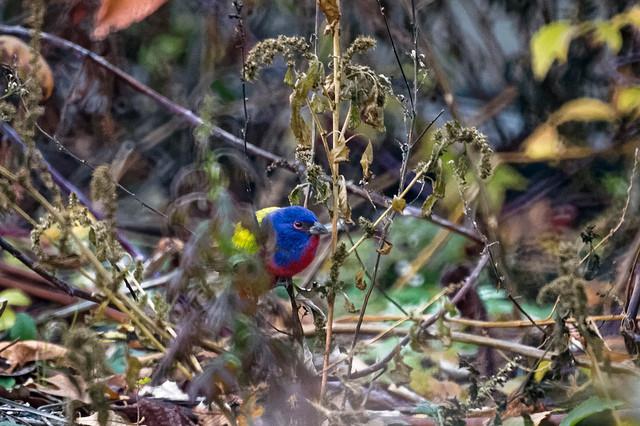 This bird...it's a cool bird... via Flickr user Will Pollard
