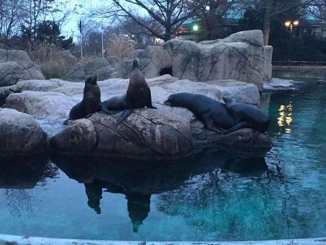 Sea lions!!! (pic by Alix Piorun)