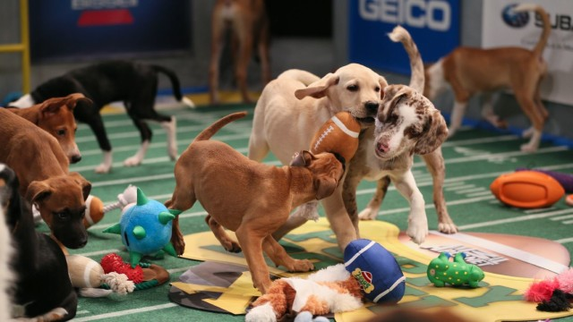 Puppy Bowl stars Cam Chewton and Peyton Mansbestfriend fight it out on the field. Via Animal Planet.