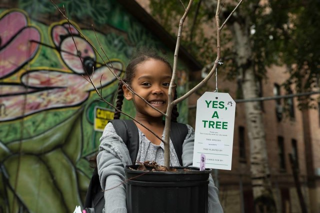 Free trees are waiting for you. Photo from the New York Restoration Project's fall giveaway in the Bronx, via Facebook.