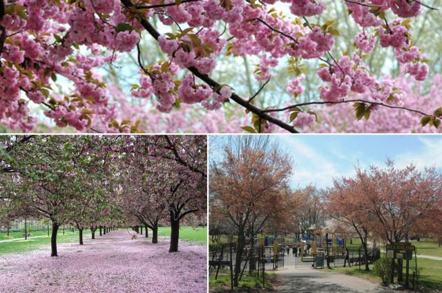 Awesome blossoms. Photo via Brownstoner.