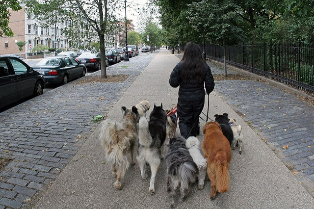 Why walk just one dog when you can walk five?  via Flickr user Gunnar